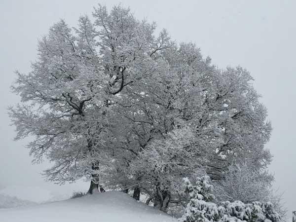Nieve en Muskilda